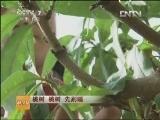 桃树种植科技苑,桃树 桃树 先别睡