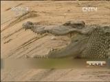 莫怡炯鳄鱼特种养殖生财有道,险中求财养鳄鱼