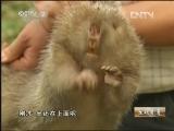 唐文荣竹鼠特种养殖生财有道,疯狂的竹鼠