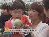 苍南县陈忠何种植西红柿蔬菜的创业致富经