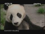 《人文地理》 20130609 探访魔沟 (下)