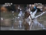 《生命》 20130611 片段 美洲怪蜥