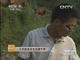 贺根养牛致富经,一个90后大学生的黄牛梦