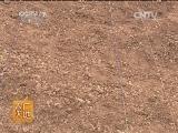 [农广天地]塔罗科血橙种植技术(20140113)