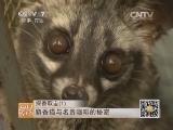 [每日农经]探香取金(1)麝香猫与名贵咖啡的秘密(20140319)