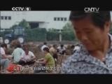 [牡丹]第二集 独立人间第一香 江南的杨山牡丹