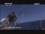 [食品技术]夏威夷海捕鲯鳅