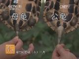 养龟技术农广天地,黄喉拟水龟养殖技术(2