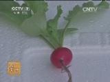 [农广天地]穴盘栽培樱桃萝卜(20140428)
