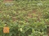 [农广天地]大豆秕荚原因及预防(20140505)