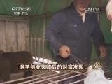 马刘洋特种养殖致富经,退学创业失败后的财富发现(20140523)