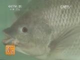 [农广天地]尼罗罗非鱼养殖技术(20140603)