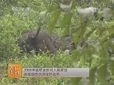 [农广天地]乌金猪养殖技术(20140611)