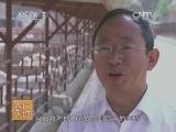 [农广天地]陕北白绒山羊养殖技术(20140624)