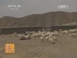 [农广天地]柴达木绒山羊养殖技术(20140708)