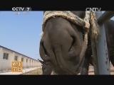 [每日农经]骑着乌驴看账本(20140714)