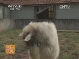 [农广天地]马头山羊养殖技术(20140811)