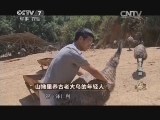 陈跃洲养鸟致富经,山坳里养古老大鸟的年轻人(20140814)