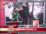 搞笑国宝:熊猫爬树被卡树枝 拼命挣扎惹路人大笑 00:01:17