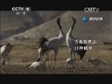 [美丽中国]黑颈鹤 片段