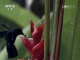 《生命》第九集 植物 00:47:15