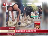 民间牛人:超快速剪羊毛 绵羊都反应不及