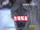 """《生活早参考》 20150901 """"爱拼才会赢""""系列节目 狼犬传说"""