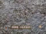 谭健标养鱼致富经,总能超前一步的养鱼高手(20151113)