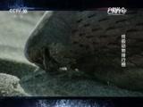 《自然传奇》 20160116 终极动物排行榜