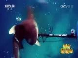 潜水遭遇鲨鱼 澳大利亚男子惊险逃生