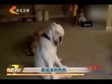 最摇滚的狗狗
