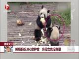 熊猫妈妈360度护食 亲母女也没商量