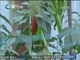新闻斗阵讲 2017.5.9 - 厦门卫视 00:25:15