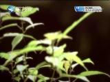 百年巨匠 齐白石 两岸秘密档案_2017.06.12 - 厦门卫视 00:40:49