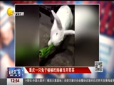 重庆一只兔子顿顿吃辣椒当开胃菜h h