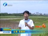 《河南新闻联播》 20170814