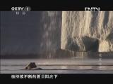 《魅力纪录》 20120704 冰冻星球 第三集 夏季