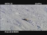 《魅力纪录》 20120706 冰冻星球 第五集 冬季