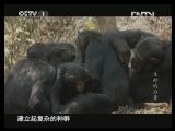 《魅力纪录》 20130426 生命的力量 第五集 非洲裂谷