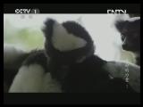《魅力纪录》 20130422 生命的力量 第一集 马达加斯加