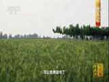 《中国影像方志》 第23集 河北巨鹿篇 00:39:45