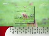 《动物世界》 20171213 动物技能大比拼(三)