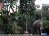 东南亚观察 2017.12.23 - 厦门卫视 00:03:49