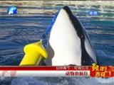 [新闻60分-河南]玩转春节·奇趣生活 动物也疯狂