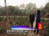 [走遍中国]黄帝手植柏种子太空旅行