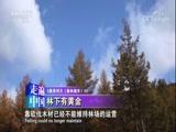 [走遍中国]辽宁桓仁的枫林谷