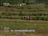 《焦点访谈》 20180401 乡土中国农村系列调查 小洋芋做出大文章