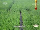 《中国影像方志》 第66集 江苏沛县篇 00:39:49