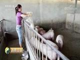《消费主张》 20180523 猪肉价格为何跌跌不休?