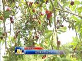 """经营果园的""""新农人"""" 视点 2018.5.26 - 厦门电视台 00:14:28"""